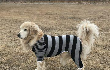 ラフィンドッグ犬服教室 パターンソーイング7