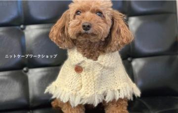 ラフィンドッグの編み物教室ワークショップ